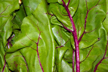 remolacha: Las hojas de remolacha se cierran para arriba Foto de archivo