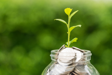 Selective focus on green sprout plant on jar with full of coins as growth finance investment concept. Stockfoto