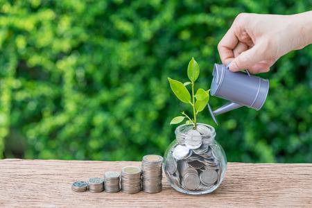 Stapel von Münzen und von Wachstumssprösslingsanlage mit der Hand, die als Geschäftsfinanzierung wässert oder wachsen Investitionskonzept.