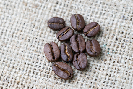 Closed up of roasted coffee beans on gunny bag background, selecting best aroma quality for business drink and beverage concept.