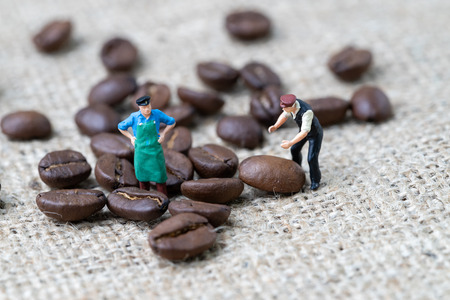 Coffee professional or expertise concept, miniature people figurine worker standing with roasted coffee beans on gunny bag, selecting best aroma quality.