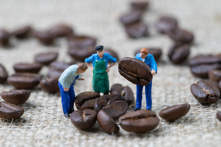 Coffee beans business expert or professional concept, miniature people figurine worker standing and holding roasted coffee beans on gunny bag background, selecting best quality.
