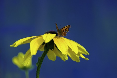 Beautiful butterfly on a yellow flower against the blue sky