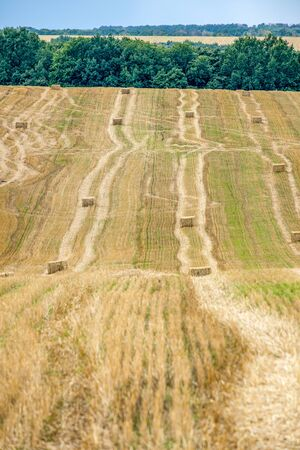 Rectangular straw briquettes after harvesting wheat on the field. Lines on the field extending into the distance left by agricultural machinery during wheat harvesting. Stock fotó