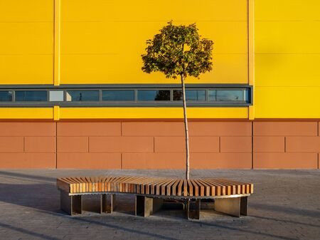 A curved wooden bench and a lonely small tree near the yellow wall of an industrial building on a sunny autumn day. Fading foliage.