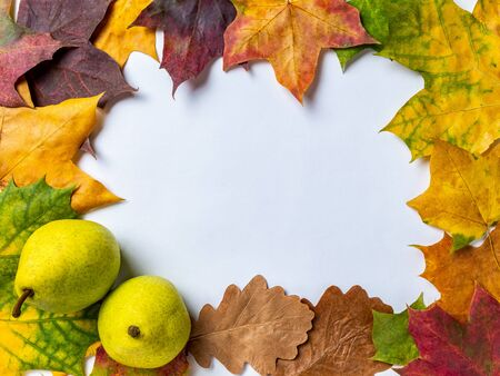 Autumn background with two ripe pears and colorful maple and oak leaves on a white background. Top view with space for your text