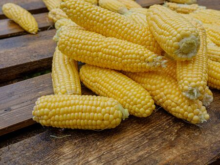 Wet washed corncobs lie on rough wet wooden boards. Harvest crop. Appetizing ripe sweet corn Stock Photo - 133331062