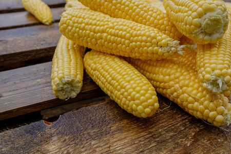 Wet washed corncobs lie on rough wet wooden boards. Harvest crop. Appetizing ripe sweet corn