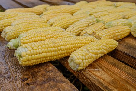 Wet washed corncobs lie on rough wet wooden boards. Harvest crop. Appetizing ripe sweet corn Stock Photo - 133331065