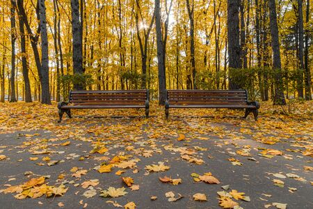 Autumnal alley in the park covered with bright yellow-orange leaves on a sunny day. Two park benches in the backlight of the sun. City park in the fall during fall foliage. Imagens