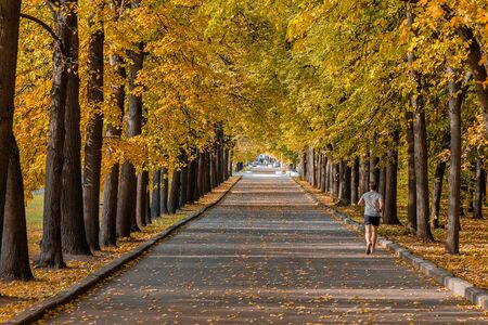 Alley in a city park on a sunny autumn day. A man jogs along the alley. A carpet of colorful leaves and trees in the light of the sun. Imagens
