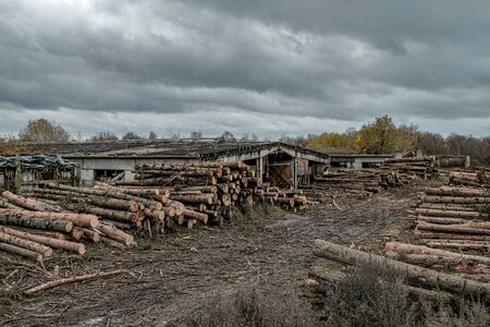 Many softwood logs lie along the road in mud and puddles on a cloudy fall afternoon at an old abandoned sawmill. In the background is a cloudy sky with gloomy heavy clouds. Stock Photo