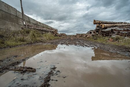 Many softwood logs lie along the road in mud and puddles on a cloudy fall afternoon at an old abandoned sawmill. In the background is a cloudy sky with gloomy heavy clouds.