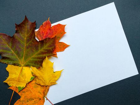 Frame of autumn leaves. White sheet of paper with a place for inscription. Blank for congratulations. Collage. Stock fotó