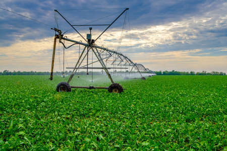 Watering beets in a large field using a self-propelled sprinkler system with a center swing. Modern agricultural technologies. Industrial production of agricultural crops. Copy space