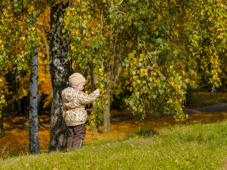 The girl walks in the autumn park. The girl touches the yellowing leaves