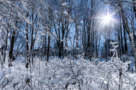 Night view of trees covered with snow in a city park. The bright light of the lantern. Snowfall. Forest fairy tale before the new year. Banque d'images