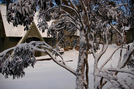 Snow covered gum-trees in front of log cabins in the Snowy Mountains, Australia.