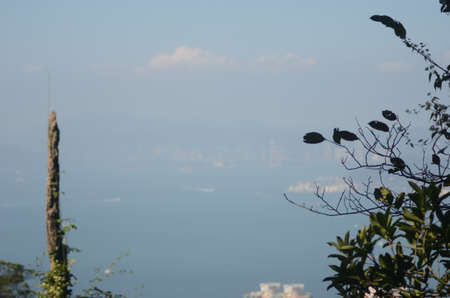 A view across Hong Kong harbour to the city through the haze. A tree frames the foreground.