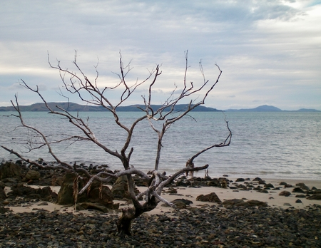 A leafless tree stands on a deserted beach. It is surrounded by pebbles and some sand. Across the water are some hills. The sky is overcast. Stock Photo