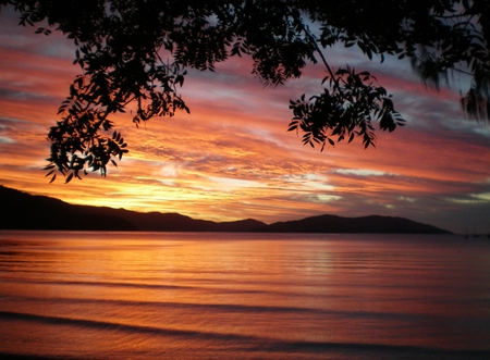 Sunset over a bay. The picture is framed by the branches of a tree caught in silhouette, and hills form the backdrop. The colors are oranges, purples and black.