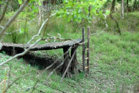 森の真ん中に、古い木造の桟橋。はしごは、草で今満ちているダムの底につながります。トレスはフレーム表示です。 写真素材