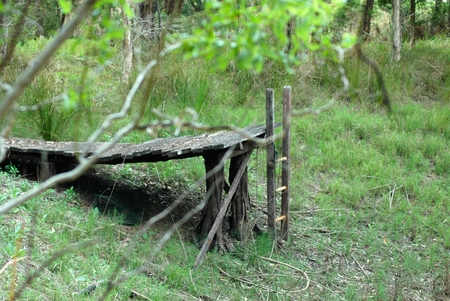 An old wooden pier in the middle of a forest. A ladder leads to the bottom of the dam, which is now filled with grass. Tress frame the view. Stock Photo