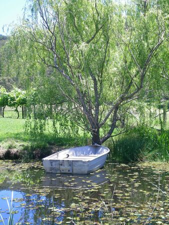 A tin boat on a leaf-covered pond. The boat is tied to a tree. Some grape vines can be seen in the distance, plus tree-covered hills.