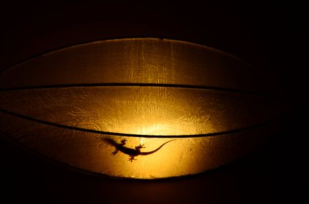 A gecko is seen in silhouette inside a lamp. Stock Photo