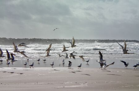 A flock of seagulls flying across a stormy beach. Waves are breaking. There is a rock breakwater in the background. The sky is full of grey clouds.