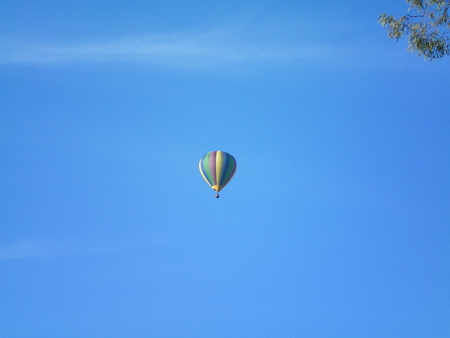 A colourful hot air balloon floating against a blue sky. There are some faint white clouds. The colours of the balloon are in striped panels of yellow, green, blue and purple. A branch of a gum tree frames the upper corner of the photograph.