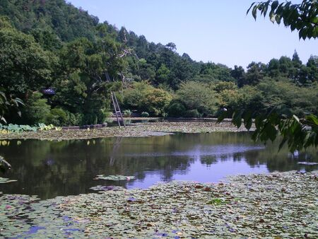View over a lily pond to an old tree supported by wooden poles. There are ripples on the water. Trees border the pond, and a hill covered in pine trees is in the background. A tile covered roof can just be seen amongst the trees. Stock Photo