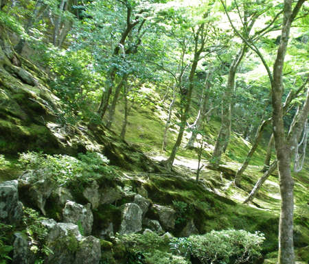 Sunlight falls amongst trees on a slope. The gound is covered with green moss. The trees are in leaf. Some moss-covered rocks are in the foreground.The photo is in shades of green