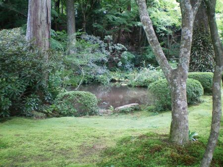 A leafy green glade in a forest, with a tranquil pond. Moss covers the ground.