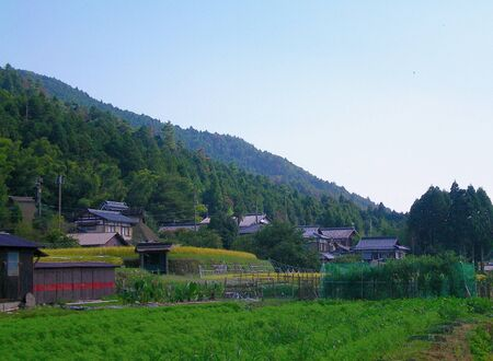 Traditional Japanese houses on a hillside. The hills are covered in pine trees. Lush green crops and netted fruit trees are in the foreground. The sky is blue, with no clouds.
