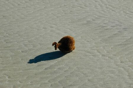 A bottle-shaped sea sponge on a deserted beach. The sand has a ripple pattern from the tide. The sponge is brown, and casts a black shadow.