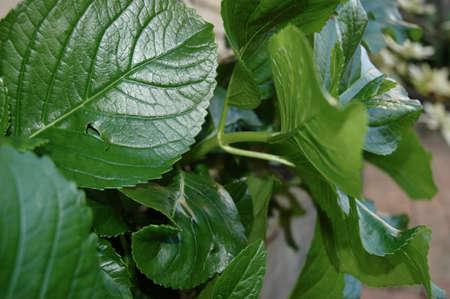 緑豊かなクローズ アップ、緑を葉します。彼らは様々 な角度、サイズおよび形で見られています。