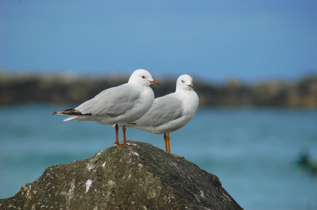 A close-up of two seagulls standing on a rock. The sea with the beach is behind them. The sky is blue with no clouds. Stock Photo