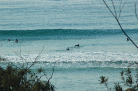 A group of surfers paddling to catch the next wave. The ocean is blue, and a large wave is forming. The photograph is framed by the branches of trees. Stock Photo