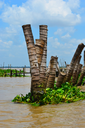 Logs of wood stacked vertically to make a breakwater in the Melong Delta, Vietnam.  Water plants have collected around them, and the river is muddy. Other breakwaters are in the distance. The sky is blue with white clouds.