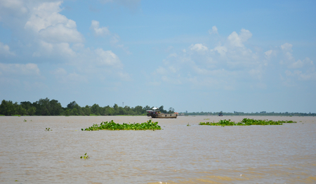A muddy river on the Mekong Delta stretches to the horizon. Large clumps of floating plants dwarf the wooden boats on the water. The sky is blue, with some clouds.