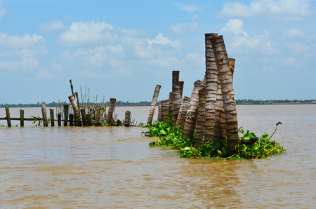 Tree trunks are used as a breakwater in a muddy river. Clumps of water plants have gathered around them. The sky is blue, with white clouds. A forest-covered shoreline is on the other side of the river, which forms part of the Mekong Delta in Vietnam.