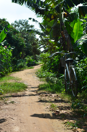 A dirt path winds through tropical overgrowth. The path is lined by lush trees and plants. To one side rests a bicycle with a basket.