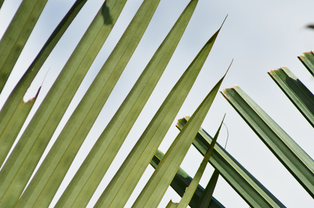 Green palm fronds rise against a blue sky. Some are pointed, others are broken with rough edges.