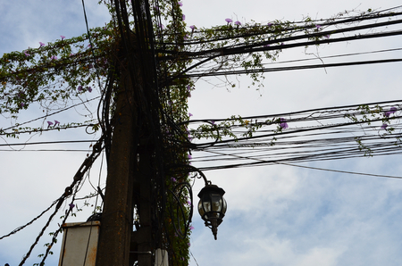 A telegraph pole with dozens of cables tangled together. They are covered with a vine which has purple flowers. A black metal lamp is visible, as well as a meter box. They are silhouetted against a blue sky with white clouds.