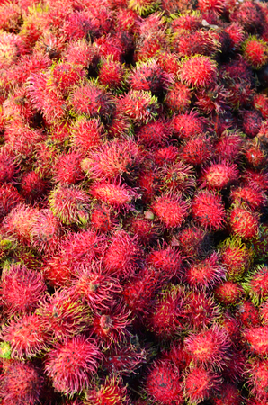 Hundreds of red rambutan for sale in a market. The fruit is covered with red and yellow spikes. Stock Photo