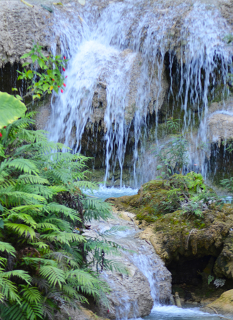 A shallow waterfall is tumbling into a rock pool. Ferns and a plant with small red flowers are growing on the stones. Stock Photo