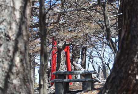 A red Japanese torii - or gate marking an entrance to a shrine - is seen among some trees. The branches of the trees are bare. A stone seat is in the foreground.