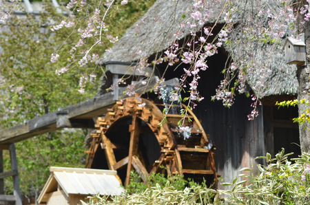 A traditional Japanese thatched roof building, with an adjacent water wheel. Branches of flowering cherry blossom frame the view.