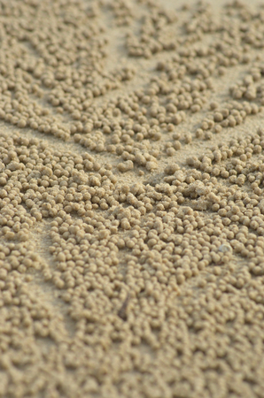 Hundreds of tiny balls of sand are clustered around the opening of a crab hole. They form an abstract pattern. The sand is pale gold in colour. Stock Photo